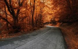 Árvores, estrada, outono