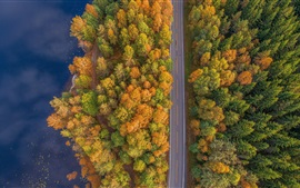 Preview wallpaper Trees, road, river, autumn, top view