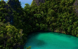Tropical, sea, green, forest, turquoise