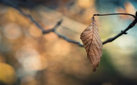 Preview wallpaper Twigs, dry leaf, bokeh