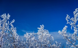 Twigs, tree, snow, blue sky, winter