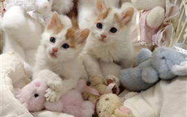 Preview wallpaper Two kittens and toys