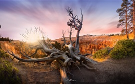 USA, Utah, Bryce Canyon, trees, sunset