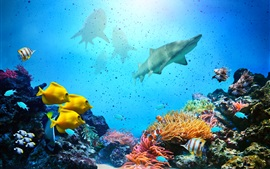 Preview wallpaper Underwater, fish, coral, shark, sea