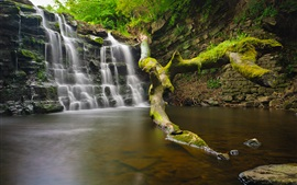 미리보기 배경 화면 폭포, 물, 나무, 바위