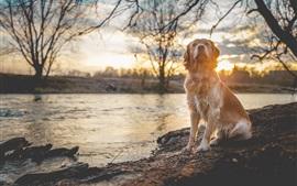 Cachorro molhado, ribeirinha, rio, árvores, pôr do sol