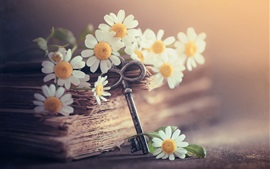Preview wallpaper White chamomile flowers, book and key