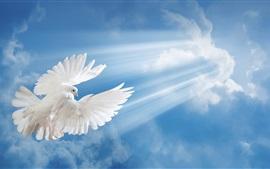 Белый голубь, голубое небо, облака