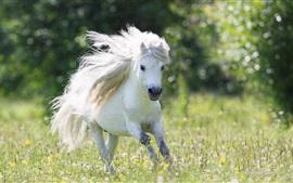 Caballo blanco corriendo, melena