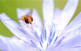 Preview wallpaper White petals flower, pistils, pollination, bee