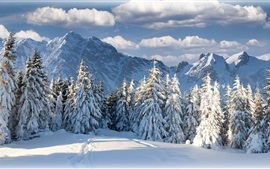 Winter, snow, forest, trees, mountains