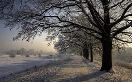 Зима, снег, деревья, дорога