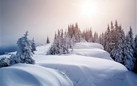 Winter, thick snow, trees, sun