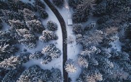 Inverno, árvores, estrada, neve, vista superior