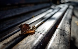 Wood bench, leaf, glare