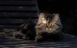 Ojos amarillos gato gris resto en el banco