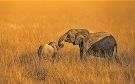 Preview wallpaper Amboseli, Kenya, National Park, elephants family, grass