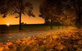 Áustria, foliage bordo amarelo, estrada, árvores, pôr do sol, outono
