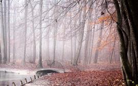 Autumn, bridge, trees, red leaves, river