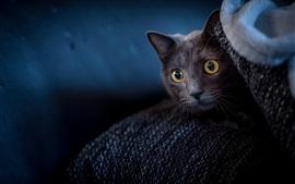 Mirada de gato negro, cara, ojos amarillos