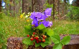 預覽桌布 藍色的花朵和草莓