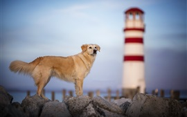 Brown dog, stones, lighthouse