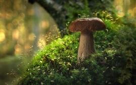 Cogumelo marrom, musgo