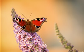 Butterfly, little pink flowers, spring