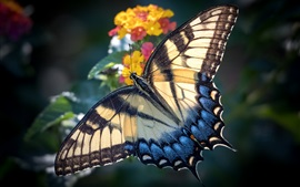 Preview wallpaper Butterfly, wings, flowers, blurry background