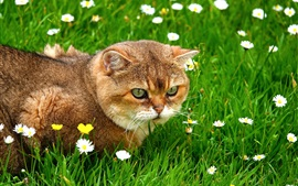 Cat in the grass, wildflowers