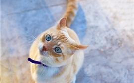 Кошка смотрит вверх, голубые глаза, милый питомец