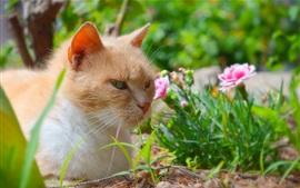Cat rest, flores cor de rosa