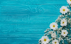 Preview wallpaper Chrysanthemum and white flowers, blue background