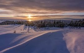 Inverno frio, árvores, pôr do sol, neve