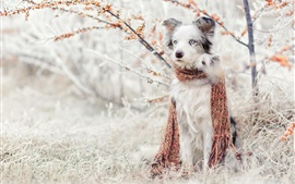 Cute dog, scarf, berries