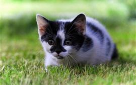 Vorschau des Hintergrundbilder Nettes Kätzchen, Gras