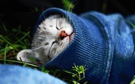Gatinho bonitinho dormindo, camisola