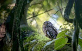 Cute owl, bird, trees, bokeh