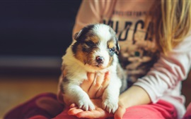 Cute pet dog on hands