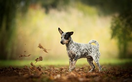 Preview wallpaper Dog look at dry leaves, autumn