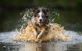 Preview wallpaper Dog running in water, splash, speed