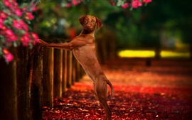 Preview wallpaper Dog standing up, fence, look