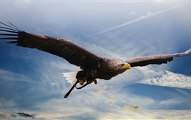 Preview wallpaper Eagle flight, predator, wings, sky