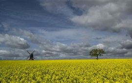 Preview wallpaper England, rapeseed flowers, windmill, trees