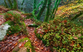 England, trees, forest, autumn, moss, leaves
