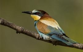 Preview wallpaper European bee-eater, bird, back view
