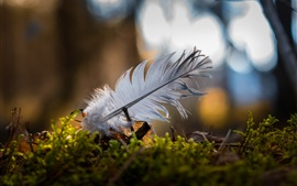 Feather, grass, bokeh