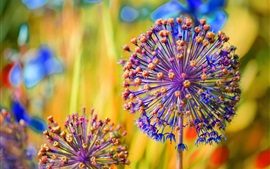 Preview wallpaper Flower ball macro photography