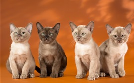 Preview wallpaper Four kittens, orange background