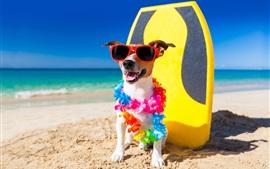 Funny dog, sunglasses, beach, sands